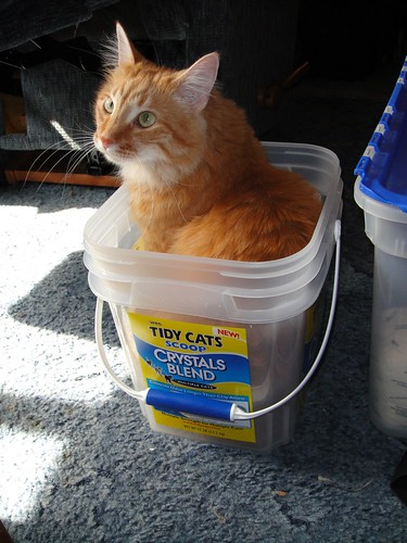 New Cat Litter That Absorbs Urine Into Lumps