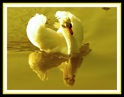 CISNE | by lillarra2006