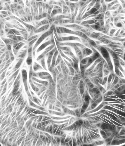 Tiger Fractalius | by Till Walley