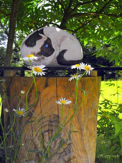 CHAT SIAMOIS | by rockpainting ☼ yvette