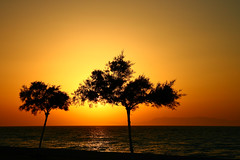trees at sunset | by ester-**