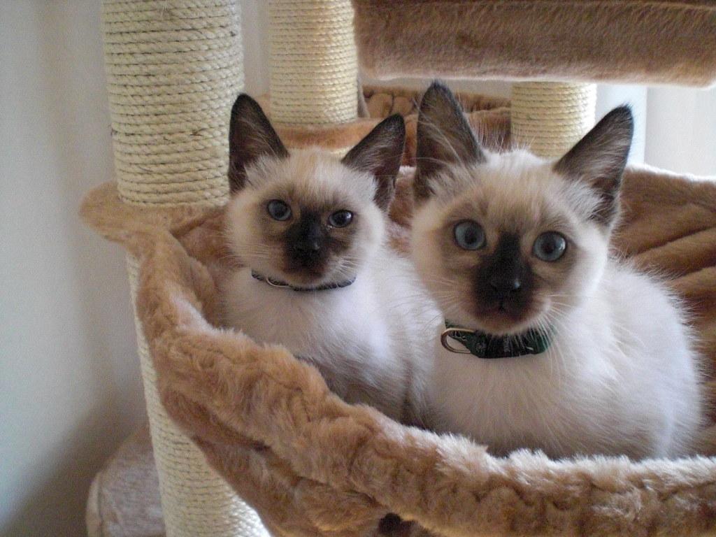 Katzen 075 Guten Morgen Gretel Li Lotte Re
