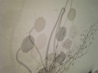 marc moll ikebana shadow | by the incredible how (intermitten.t)