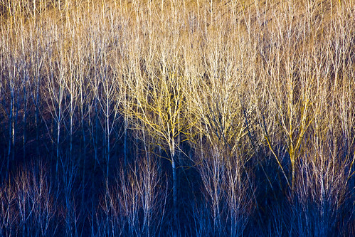 Aspens | by storvandre