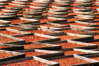 Sun Drying Tomatoes, South Africa | by Marie-Marthe Gagnon