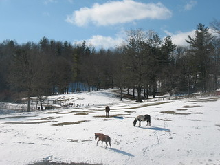 snowy pasture | by october blue ( on/off )