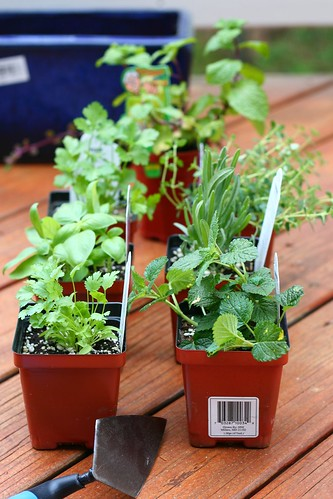 Planting Herbs | by Sala @ Veggie Belly