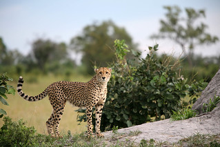 IMG_1818 | by Jose Cortes III / Asia to Africa Safaris