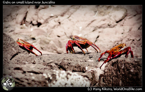 Crabs on small island near Juncalito | by exposedplanet