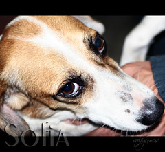 Sofia meu outro anjo - Sofia my other angel | by Occasions-Photography