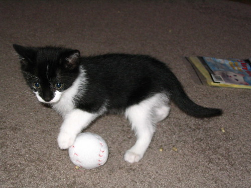 Black and white kitten with baseball toy