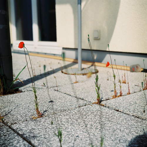 Poppy balcony. | by Julie Marques