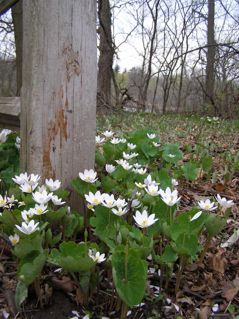 042509 Spring Flowers 1 Post Beam Flickr