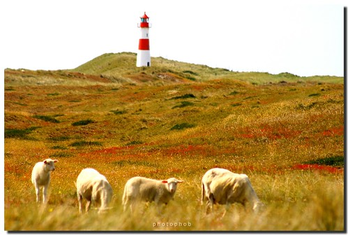 Island of Sylt - Sheeps and Lighthouse | by PHOTOPHOB