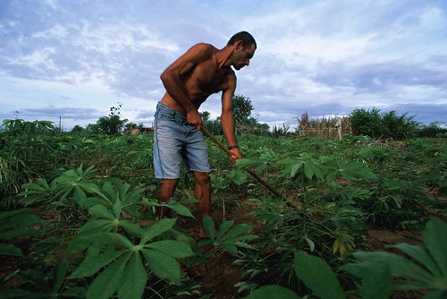 Man tending manioc field in Northeast Brazil | by World Bank Photo Collection
