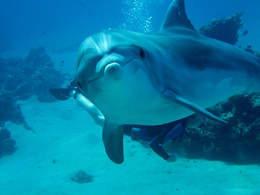 Smiling Dolphin by AvaLovesYou on DeviantArt