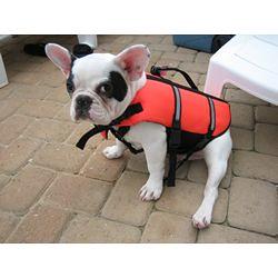 dog life jacket french bulldog puppypfd flickr
