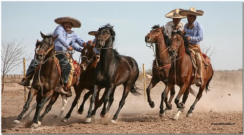 Vaqueros - view large | by MyRidgebacks - Sharon C Johnson