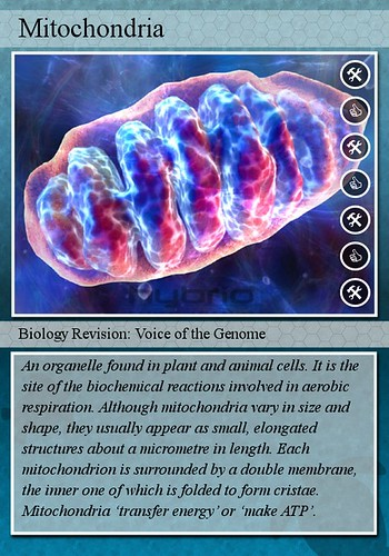Mitochondria | by biology flashcards