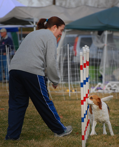 Image Result For Dog Training Columbia