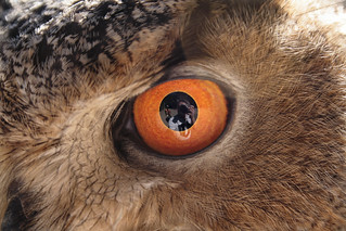 In The Eagle Owl's Eye | by GrizzledOldDog