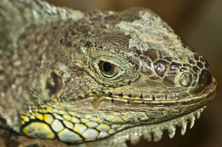 Dudley Zoo, Reptile | by Luke Hayfield Photography