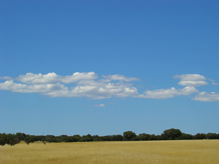 Alentejo............. | by ubichan - Away A LOT :o(
