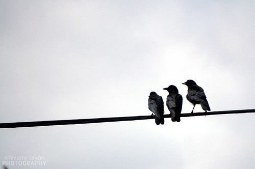 Three Crows | by Timalot