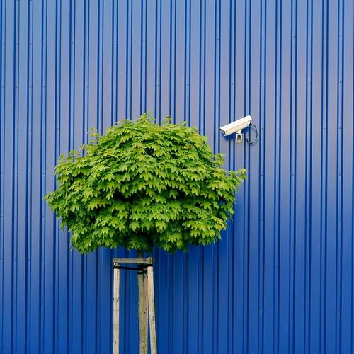 Tree watching by IKEA security kunskapens träd Baum der u2026 Flickr