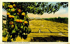 peaches_postcard_tatteredandlost | by Tattered and Lost EPHEMERA