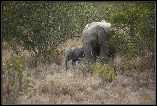 Elephant and Baby | by Hamilton Images