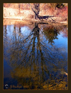 The Wiggle Tree by J.Everhart- EXPLORE | by ☺♥ julev69 ♥☺ 1,925,000+ Views- THANK YOU!