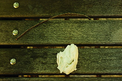 twig + napkin = a perfect little still life left behind | by christadavid
