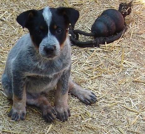Blue Puppy Dog Food