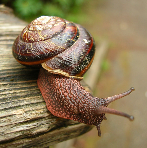 Red Washington State Snail | by Ideaholic