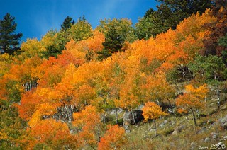 Hillside Full of Color | by pam's pics-