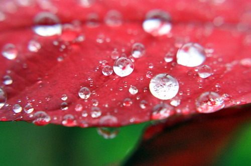 Macro water drops on leaf | by madmarv00