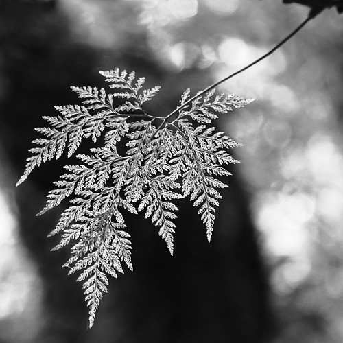 Leaf lacework | by LaraZee