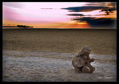 Tree Stump On Beach | by Travelling Man Photos