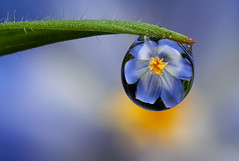 Dew Drop | by Alliec2007