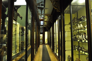 Natural History Museum - Tring001 | by wiilittleboy