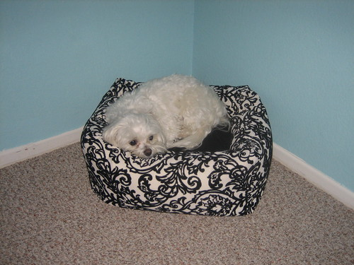 ilse loves her new bed! thanks mom and lisa! | by thenestor