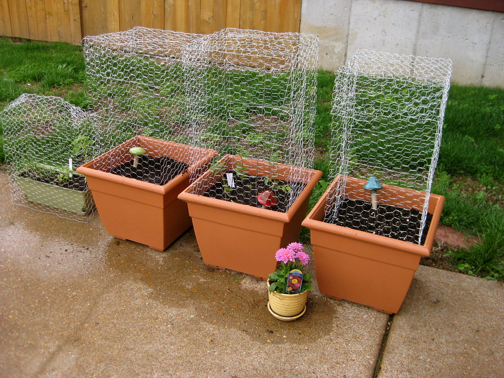 Vegetable Container Garden with Cages cages made out of ch Flickr