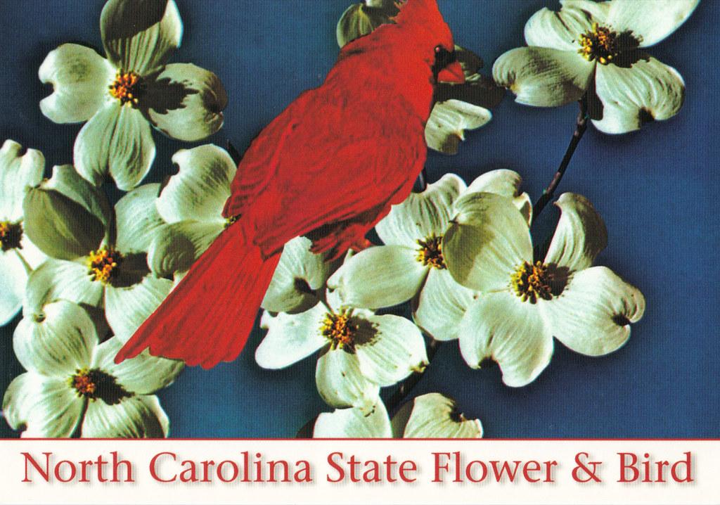 North Carolina State Symbols Postcard | US-US 3 Wishes Tag f… | Flickr