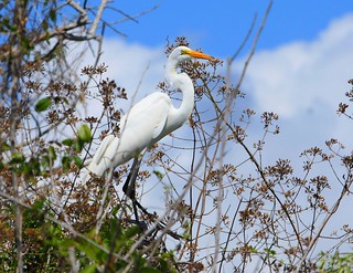 Great Egret | by Wonderful_World** (in and out)