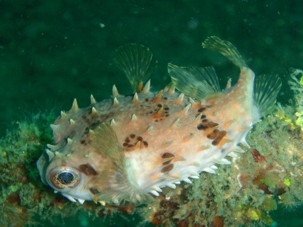 Buceo en Lembeh con Eco-divers