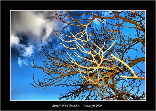 Simply Dried Branches | by Magosoft Fotografo
