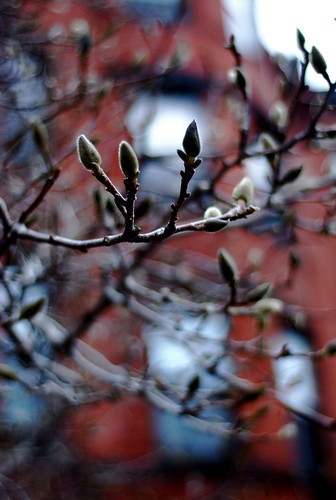 signs of spring on beacon street | by just maryse