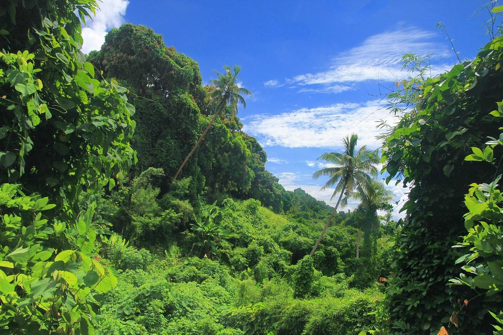 jungla tropical wwwvoltaalmoncom Jordi corominas Flickr