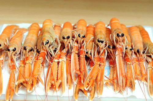 langoustine raw | by N@th